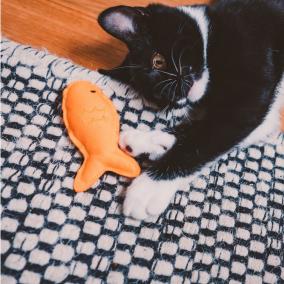 BECO CAT NIP TOY (Juguete para gato con catnip)